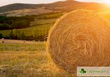Прах и мляко - 10 фалшиви алергена, от които напразно се боим