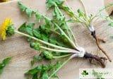 10 растения със силно изразени антивирусни свойства