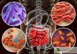 Принудиха чревни микроби да живеят задружно