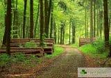 250 часа в гората – как лекува енергията на дърветата