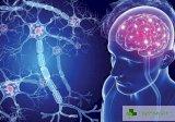 Чуждите езици намаляват проявленията на множествена склероза