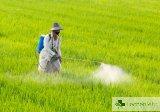 Откриха 160 тона пестициди с изтекъл срок в Пловдивско