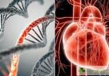 Рисковите фактори предсказват по-точно от генетични тестове инфаркт