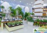 Стайните растения НЕ пречистват въздуха у дома и в офиса