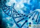 С нова технология разкриват как тайно работят гените