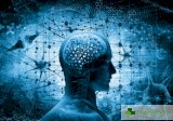 Голям размер на мозъка не гарантира висок интелект