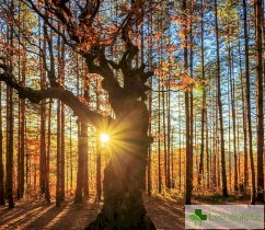 Есенен синдром – защо страда целият организъм и как да се справим