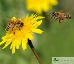 Инсектна алергия – каква трябва да е борбата в сезона на насекомите