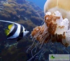 Ужилване от оса и опарване от медуза - какво да направим най-напред