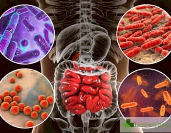 Накараха чревни бактерии да престанат да се конкурират