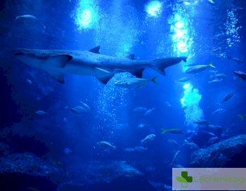 Заради глобалното затопляне рибата става все по-отровна