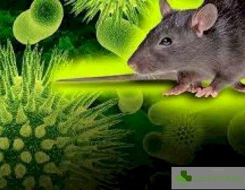 Хантавирус от Китай - заплашва ли ни нова пандемия паралелна на настоящата
