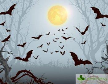 Слюнка от обикновен вампир може да свали високо кръвно