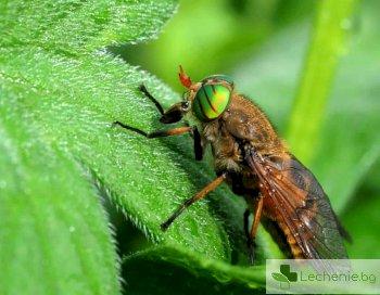 Ухапване от конска муха – какво да направим спешно, за да се възстановим бързо