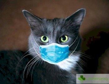 Котки се заразяват с COVID-19 и започват да го разпространяват