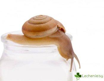 Козметика с охлюви за подмладяване - наистина ли заглажда бръчките