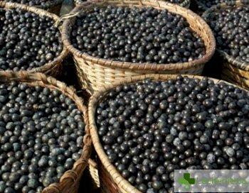 Акай бери - целебният плод