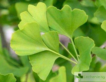Отровни билки - кои целебни растения могат да бъдат опасни