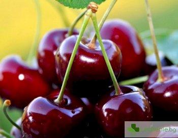 Черешова градина - вишните и черешите са не само вкусни, но и изключително полезни