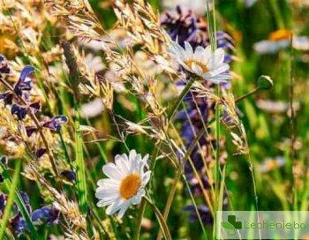 Растения, от които се произвеждат нарочените за опасни Е-та в храните