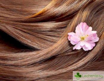Топ 5 натурални средства срещу лоша миризма на косата