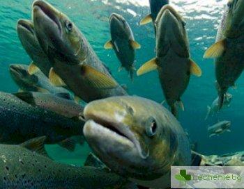 Каква риба предпазва от онкологични заболявания?