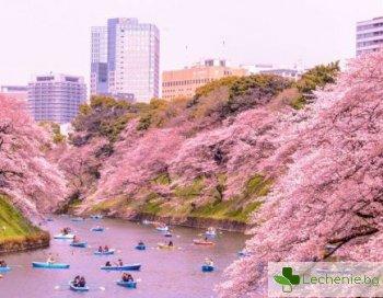 Топ 5 тайни на японската стройност
