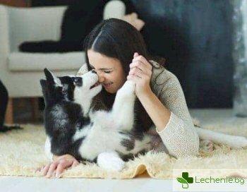 Защо целуването на кучето е опасно за зъбите