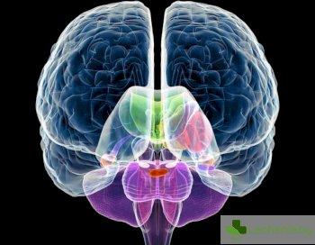 С изкуствени неврони се обогатява човешкият мозък