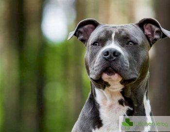 Разкрити са кучетата, които са най-опасни за деца