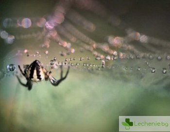 Паяци помогнаха залепването на рана да стане за секунди