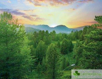 Да помиришем лавандула -7 научно доказани начина как да се успокоим бързо