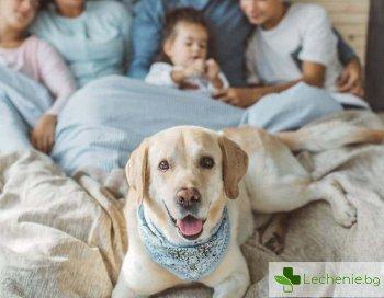 Спане с домашни любимци