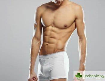 Голяма мъжка тайна - защо тестисите трябва да са извън тялото