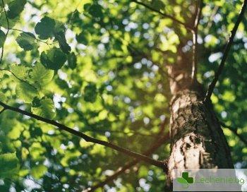 Дърветата - спасението от хроничния стрес в големия град