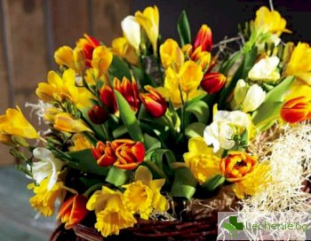 Най-безопасните цветя за подарък за 8 март при алергии