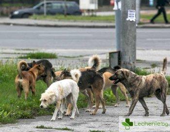 Уличните кучета са скрит източник на коронавирусна инфекция