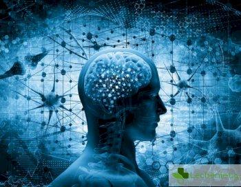 Голям мозък не означава ум остър като бръснач