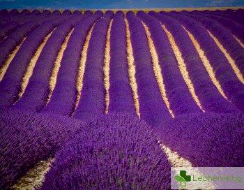 Урината на французойка придоби неочаквано лилав цвят