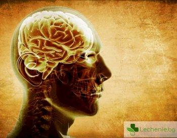 Потвърдено: шах и кръстословици поддържат остър ум до дълбока старост