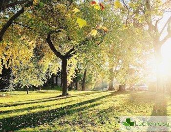 Защо е толкова полезно да живеем максимално близо до парк