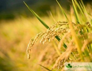 Златен ориз с витамин А може да спаси милиони деца от слепота