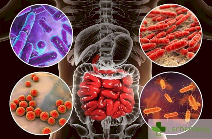 Новооткрити бактерии повишават риска от рак на дебелото черво