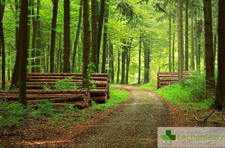 250 ч. в гора – как може да ни лекува енергията на дърветата