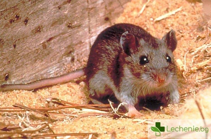 Нова зараза от Китай – починал от миши вирус
