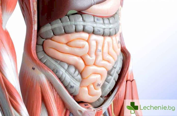 8 начина да поддържате храносмилателната си система здрава
