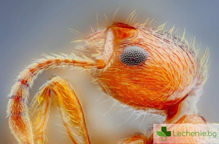 Мравки и насекоми - източник на нови лекарства