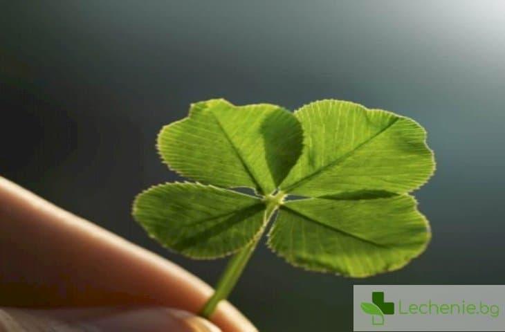 Как да привлечем късмет - топ 3 научно доказани начина