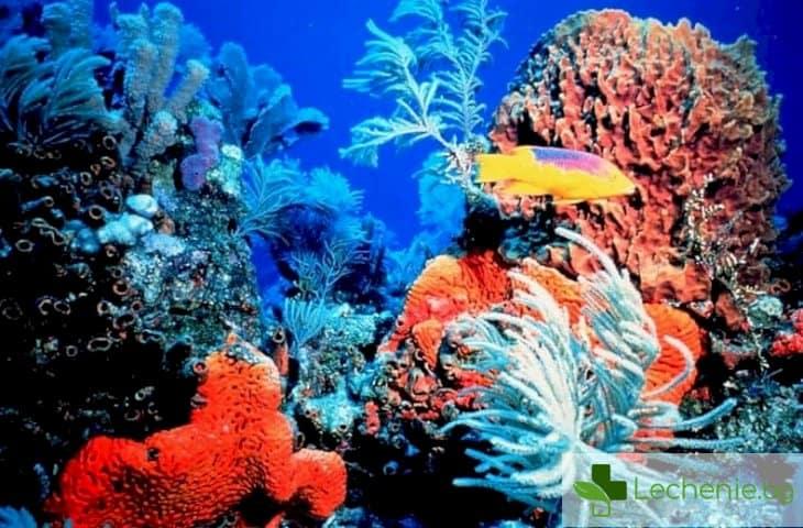 Знаете ли, че красивите корали в аквариумите могат да бъдат отровни?