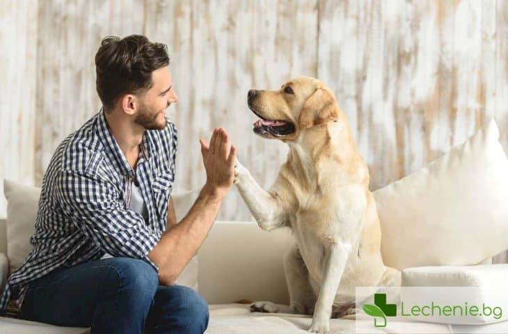 Кучешки грип - кога ще стане опасен за хората